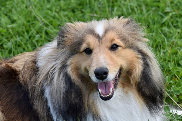 Baloo, il cagnolino che è riuscito a riabbracciare la sua famiglia dopo 11 anni