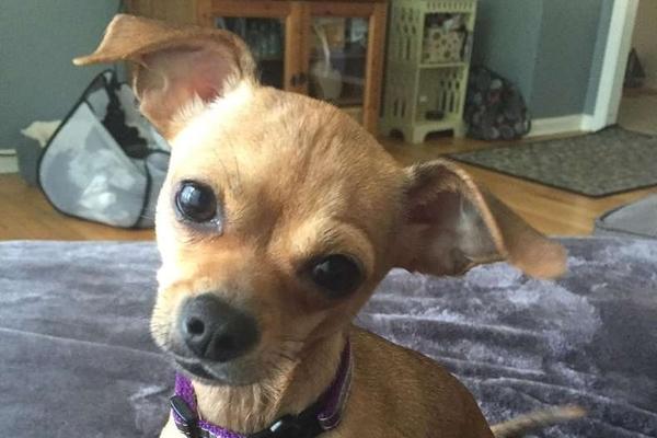 Bristol, la cagnolina dolcemente innamorata del suo papà (VIDEO)