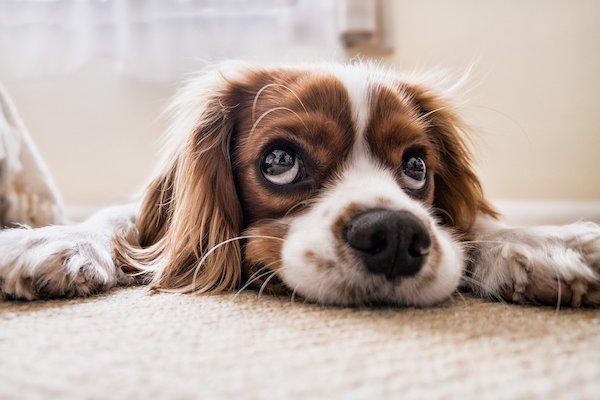 Cane che sospira: scopriamo perché lo fa e che significa