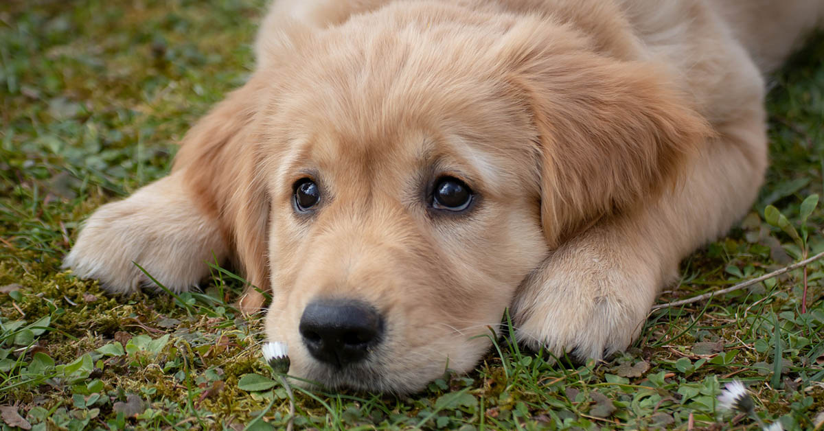 cane che sospira, cosa vuole?