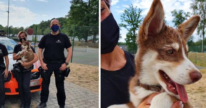 Cucciolo di Husky salvato dalla Polizia