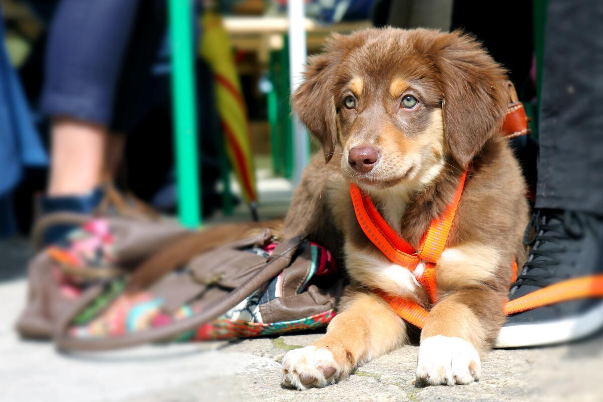 cucciolo di cane al guinzaglio