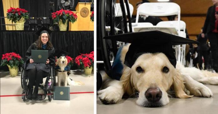 Golden Retriever che si è laureato