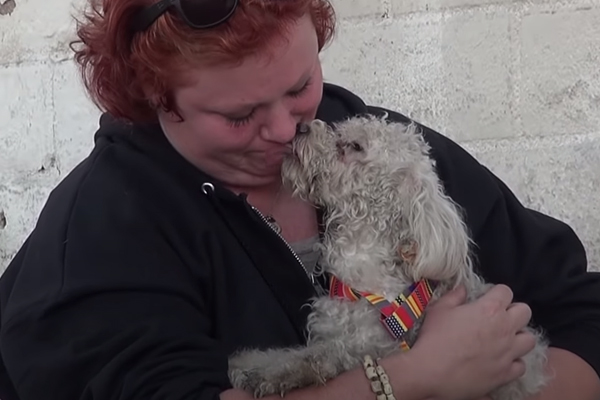 Barboncino bacia una donna