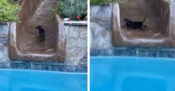 Bassotto in una piscina