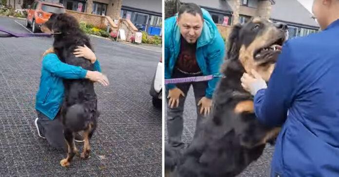 Cane che abbraccia i padroni