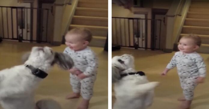 Cane che balla con un bambino