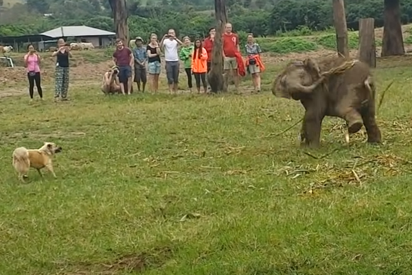 Cane che gioca con un elefantino