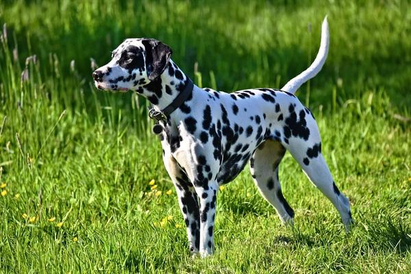 Il cagnolino scodinzola alla proprietaria, ma non sa che lo sta abbandonando (video)