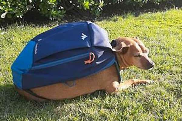 Il cane Luigi ha ricevuto il Premio Fedeltà 2020 di Camogli: consegnava la spesa alla nonna durante il lockdown