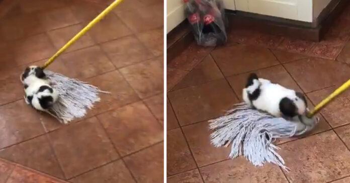 Cucciolo di cane che gioca con mocio