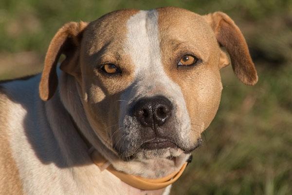 Il salvataggio di Champi, il cagnolino ricoperto di catrame che ora vuole essere felice