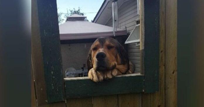 cane affacciato alla recinzione
