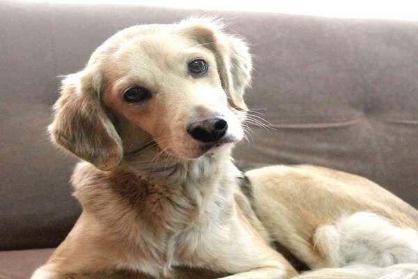 """Jean Gray, la cagnolina che ha una routine della buonanotte condivisa con il suo """"papà"""" (VIDEO)"""