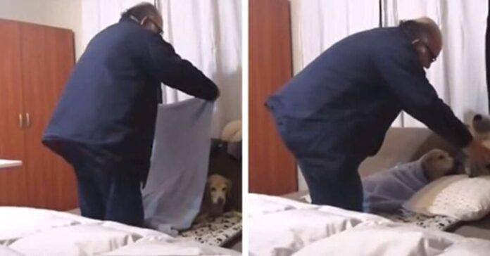 uomo rimbocca le coperte al cane