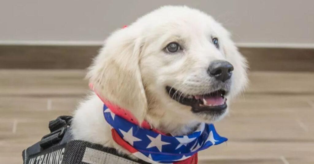 Cucciolo di Golden Retriever da Pet Therapy