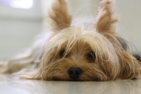 Kangoo, il cane che sembrava condannato ai Caraibi e che oggi è rinato a Empoli