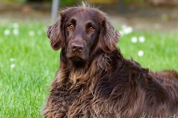 La festa di addio per la cagnolina Sophie che ha commosso il web (video)