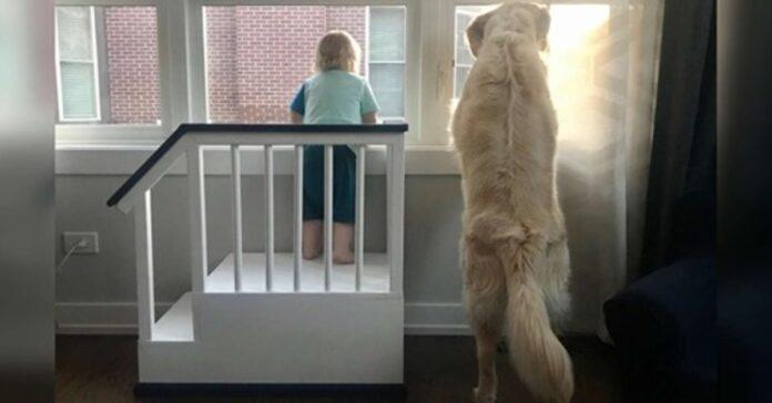 cane e bambino che guardano fuori dalla finestra