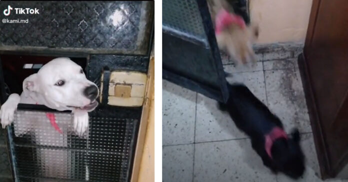 Cane che apre la porta