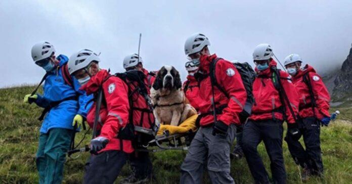 cane salvato in montagna