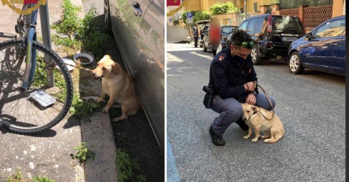 Cane salvati da un poliziotto