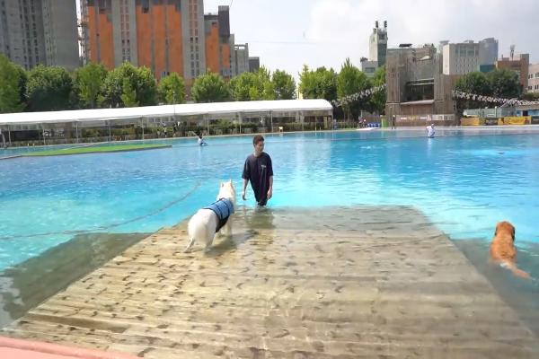 Milk il cane va in piscina e cerca di superare la sua paura(VIDEO)