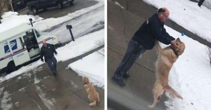 Cane fa le feste al postino