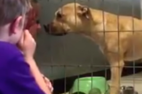 Nala, il Pitbull che è riuscito a ritrovare la felicità grazie ad un bambino di 7 anni (video)