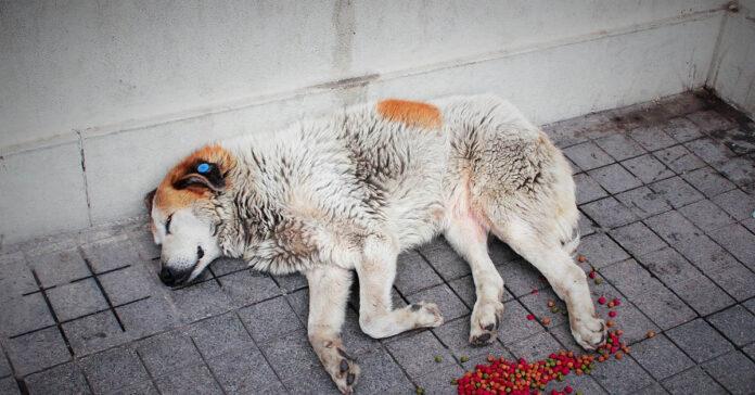 Nutrizione parenterale nel cane