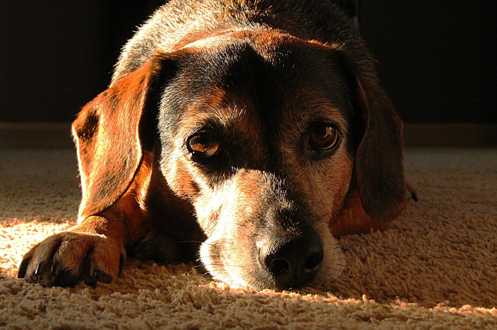 Nutrizione parenterale nel cane: cos'è, a cosa serve e cosa sapere