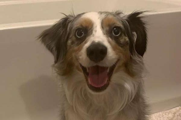 Oaken, il cagnolino che fa di tutto per non bagnarsi il sedere quando fa il bagno