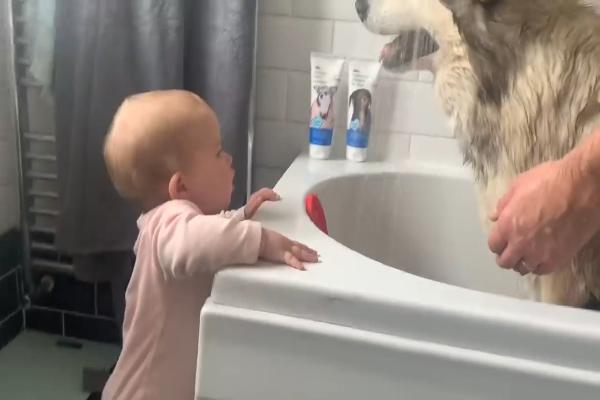 Phil, cane che odia il bagno riesce a farsi lavare grazie ad un aiuto(VIDEO)