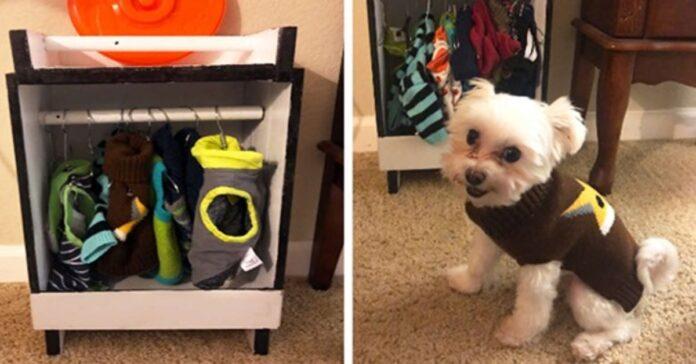 cagnolino vicino al suo armadio
