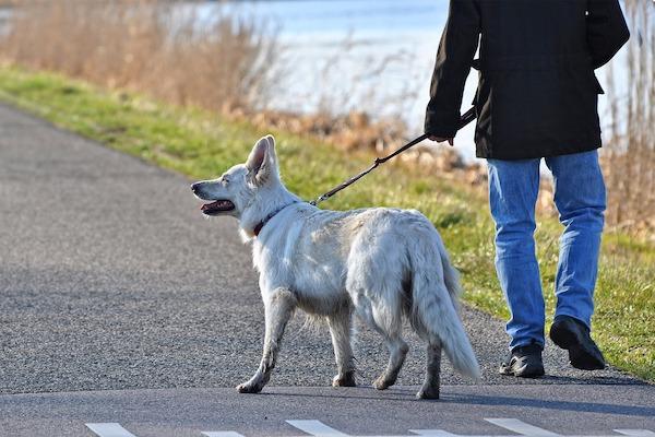 Quante passeggiate può fare un cane?