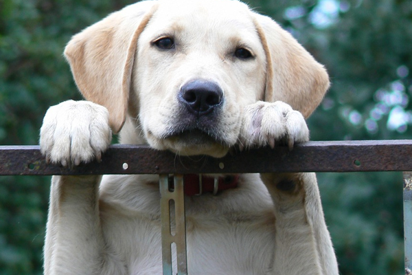 Sassuolo, cane chiuso in balcone salvato tra gli insulti e le minacce della padrona