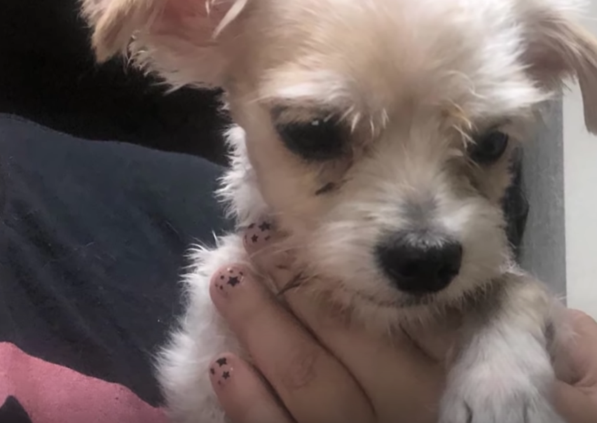 cucciolo di cane salvato