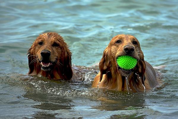 Proteggere i cani dal colpo di calore