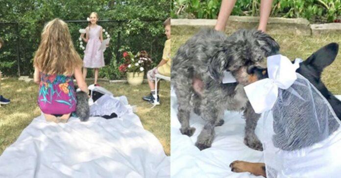 matrimonio fra cani