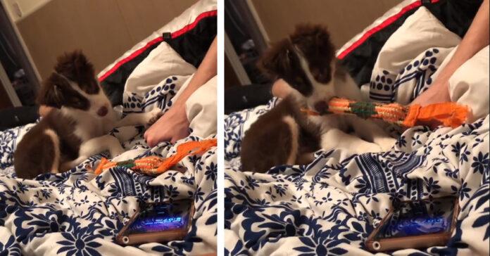 Cucciolo che osserva uno smartphone