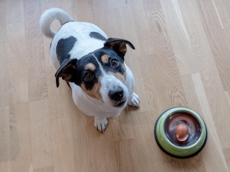 cane seduto per terra accanto a una ciotola contenente un uovo