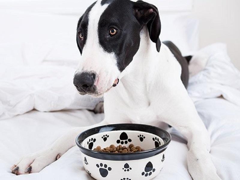 cane bianco e nero con davanti una ciotola di croccantini