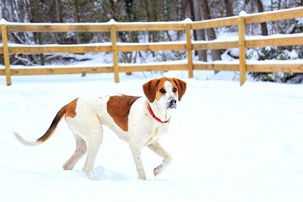 cane che gioca sulla neve