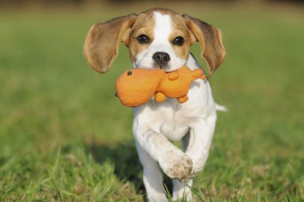 giochi adatti ai cuccioli di cane