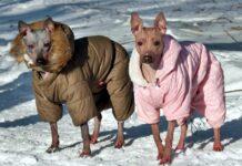 due cani con il giubbotto