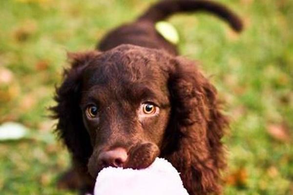 cucciolo che gioca con una palla