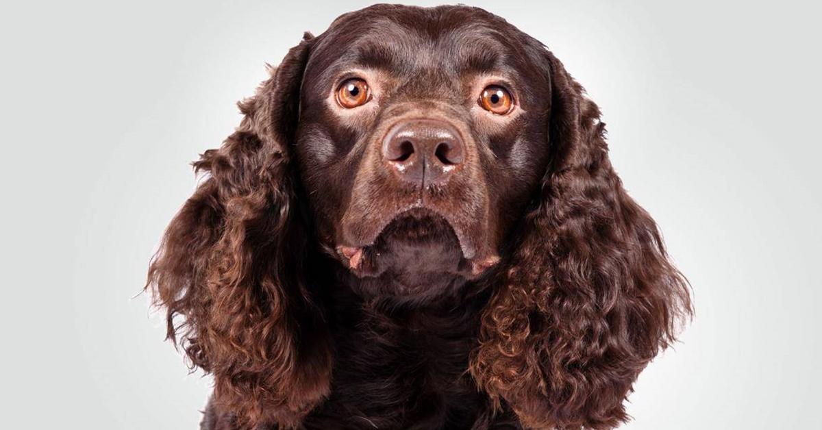 espressione buffa del cane