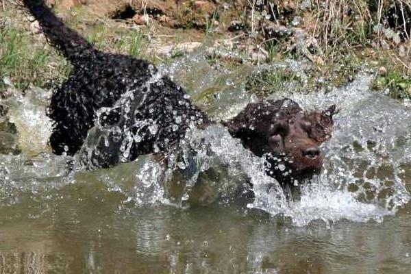cane che sa nuotare bene