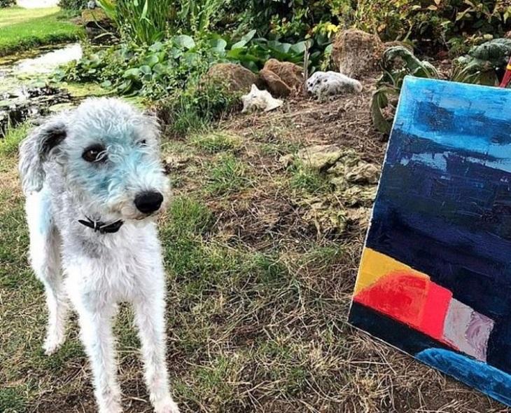 Bessie, la cagnolina che ha deciso di dipingersi di blu (FOTO)