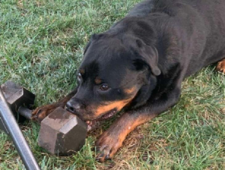 bonzo cane scopre nuovo hobby